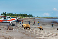 Tourists photograph grizzly bears on the beach along coast of Lake Clark National Park.  Airplanes bring them <br /> <br /> Photo by Jeff Schultz/SchultzPhoto.com  (C) 2018  ALL RIGHTS RESERVED