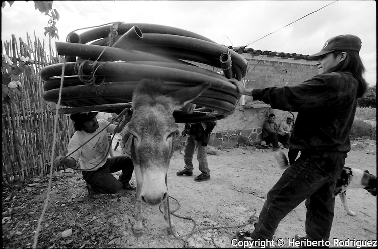 Zapotec Native neighbors carry a hose on a donkey in Coatecas Altas village, Oaxaca, November 22, 1998. Most of the villagers of Coatecas leave their home to harvest in northern state of Sinaloa.  © Photo by Heriberto Rodriguez