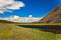 The Madison River flows through western Yellowstone National Park.