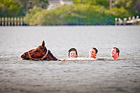 Swimming with horses in Palma Sola Bay, Bradenton, Florida, USA. Photo by Debi Pittman Wilkey