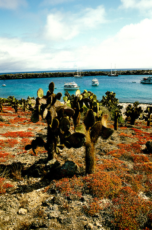 Ecuador: Galapagos..South Plaza Island.  Photo: galapa102..Photo Copyright Lee Foster, 510/549-2202, lee@fostertravel.com, www.fostertravel.com...Photo #: galapa102