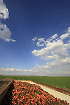 Israel, Beth Shean valley. Fields by Ein Moda