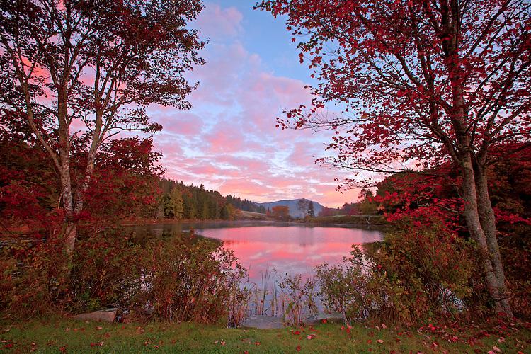 Maple trees flaunt vibrant autumn colors along the shoreline of Little Long Pond on Mount Desert Island, Maine, USA
