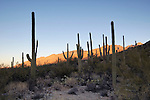 Sunrise on the Santa Catalina Mountains, Sabino Canyon Recreation Area, Coronado National Forest, Arizona