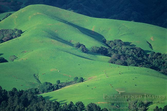 Green grass and oak hills in spring, Briones Regional Park, near Orinda, Contra Costa County, California