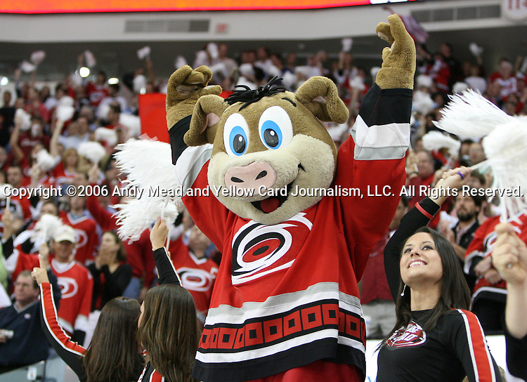 22 May 2006: Stormy the Pig, Carolina's mascot, warms up the crowd. The Carolina Hurricanes defeated the Buffalo Sabres 4-3 at the RBC Center in Raleigh, North Carolina in the second game of their best of seven National Hockey League Eastern Conference Finals playoff series. The series is tied one game apiece.