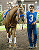 """Reckless Jerry  before The Grover """"Buddy"""" Delp Memorial Stakes at Delaware Park on 5/23/12"""