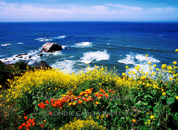 Pacific Ocean from Scenic Highway 1 on the Big Sur Coast, Central Coast of California