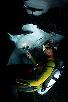 Diver (MR) and manta rays, Manta birostris, feeding at night on plankton attracted by lights off the Big Island. Hawaii.