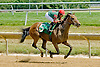Whatdoyousee winning at Delaware Park on 7/12/12