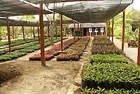 Palm tree and red mangrove seedlings at a plant nursery, Hacienda Tres Rios on the Riviera Maya, Quintana Roo, Mexicoo.