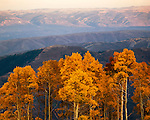 Mt. Nebo autumn, Uinta National Forest, Wasatch Mountains