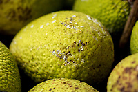 Starchy breadfruit (or 'ulu) is a healthy traditional staple foos introduced by Polynesians; this close-up of breadfruit was taken in Kalihi, O'ahu.