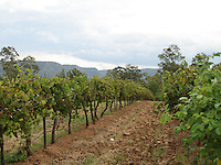 Vineyards, Hunter Valley wine country, Australia
