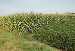 Minnesota agriculture: corn and soybeans are the two main crops of Southern Minnesota.  Shown here growing together..Photo mnqual326-75073..Photo copyright Lee Foster, www.fostertravel.com, 510-549-2202, lee@fostertravel.com.