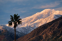 Snow on San Jacinto Mountains with palm trees at sunrise. Palm Springs, California