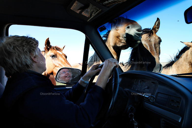 Karen Sussman's truck is surrounded by horses rescued by the International Society for the Protection of Mustangs and Burros. The Gila herd descended from the Spanish Conquistadors.
