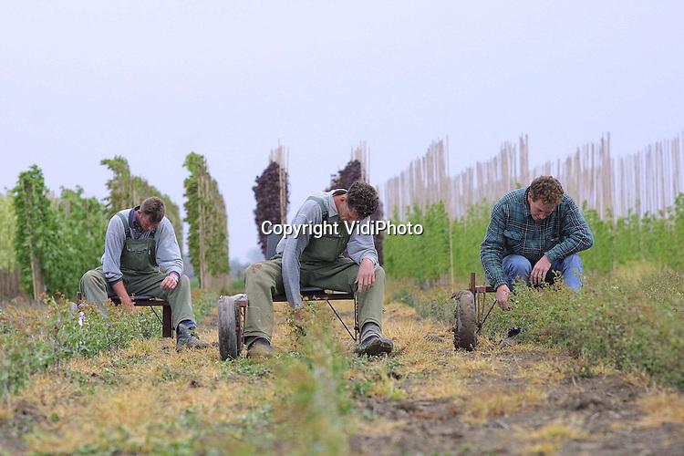 Foto: VidiPhoto..HETEREN - Ook boomkwekers kunnen het zittend verdienen. Met hun zelfgemaakte occulatiekarren verplaatsen de gebroeders Verwoert van de gelijknamige boomkwekerij uit Opheusden, zich over hun perceel in het naburige Heteren. Op dit moment verwijderen ze de wildgroei aan de ge-ente onderstammen van meidoorns. De karren voorkomen rugklachten, omdat anders gebukt gewerkt moet worden. (tel. 06-53571961)
