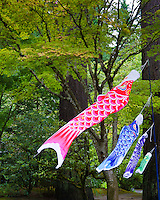 """Koinobori"", carp windsocks, carp streamers or carp banners, decorate the landscape of Japan from April through early May, in honor of Children's Day (originally Boys' festival) on May 5.<br /> In Japanese culture, the carp symbolizes courage and strength because of its ability to swim up a waterfall. These Koinobori are blowing in the wind at the Portland Japanese Garden."