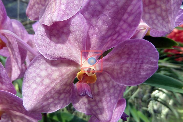 Thailand Tour.<br /> De Bai Orchid, Chiang Mai.