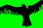 Green 11