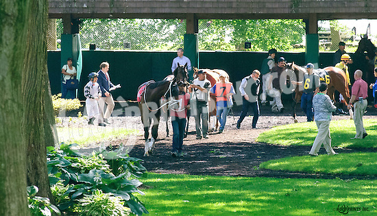 Miss Inclusive before The Our Mims Stakes at Delaware Park on 6/8/16
