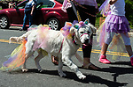 WINSTED,  CT-051819JS11- Ellis, a seven-month-old Golden Retriever, dressed as a Unicorn, walks with her owners Sarah Zbell and her daughter Natalie Zbell of Torrington, during the 83rd annual Rotary Club Pet Parade along Main Street in Winsted on Saturday. <br /> Jim Shannon Republican American