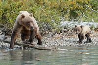 Alaska Brown bear sow and cub walk along lake shore at Crescent Lake in Lake Clark National Park, Alaska.  Summer<br /> <br /> Photo by Jeff Schultz/  (C) 2019  ALL RIGHTS RESERVED<br /> <br /> 2019 Maritta Rentz Alaska Photo Tour Bears Lake clark