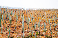 Old vines. The Hermitage vineyards on the hill behind the city Tain-l'Hermitage, on the steep sloping hill, stone terraced. Sometimes spelled Ermitage. Tain l'Hermitage, Drome, Drôme, France, Europe
