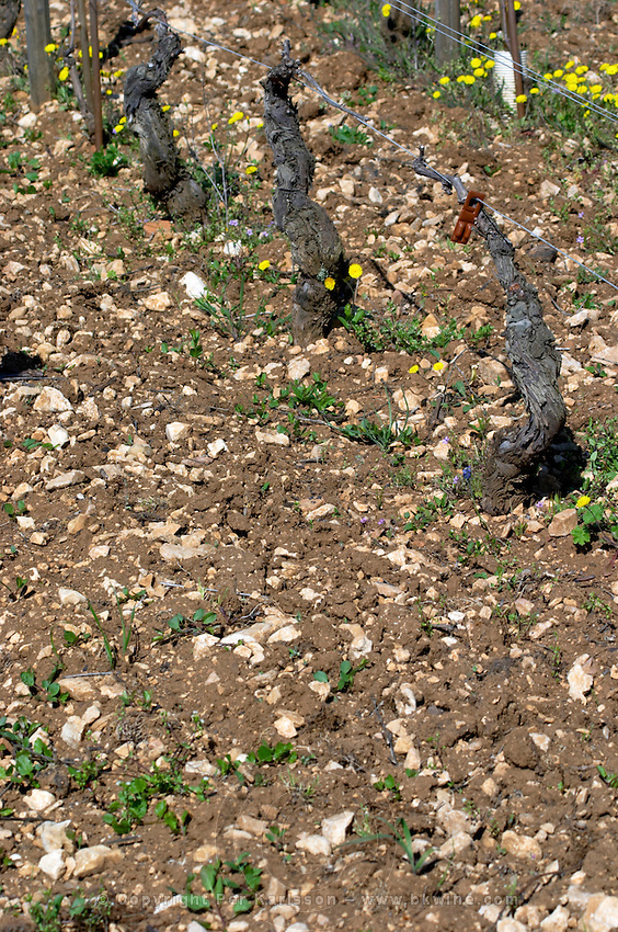 sandy soil beaune cote de beaune burgundy france