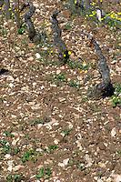 sandy soil beaune cote de beaune burgundy france