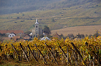 Europe/Hongrie/Tokay/Env Sarospatak/Hercegkut: Vignes