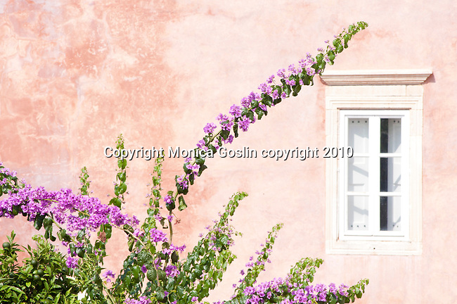 A pink house with a white shuddered window and purple bougainvillea in Dubrovnik, Croatia.