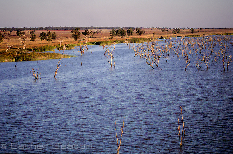 Barren Box Swamp, an irrigation dam. Riverina area west of  Griffith, New South Wales