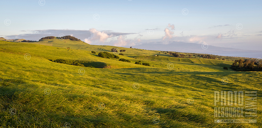 Sunset falls on rolling green grass along the Kohala Mountain Road, with Hualalai in the background, Big Island.