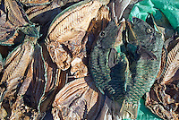 Dried parrotfish for sale on the street, Al-Qusair, Egypt.