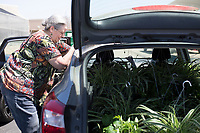 NWA Democrat-Gazette/CHARLIE KAIJO Former Rogers High School teacher Ellen Stubbs of Fayetteville loads her car with plants she bought, Thursday, April 12, 2018 at the Rogers High School greenhouse in Rogers.<br />