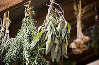 Drying bunches of herbs, rosemary, sage, garlic in barn of country garden