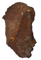 Dyeball - Pisolithus arrhiza