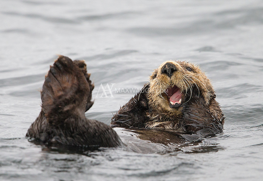 Sea otters can be rather shy in this region, but this one didn't mind the presence of our boat.