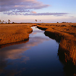 A meandering marsh gut, or creek near Bishops Head in Chesapeake Bay.