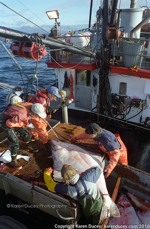 halibut fishing (© Karen Ducey Photography)
