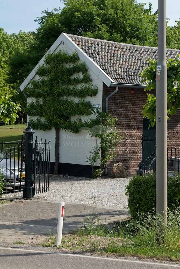 Leipeer tegen boerenschuur, Schilberg - Limburg