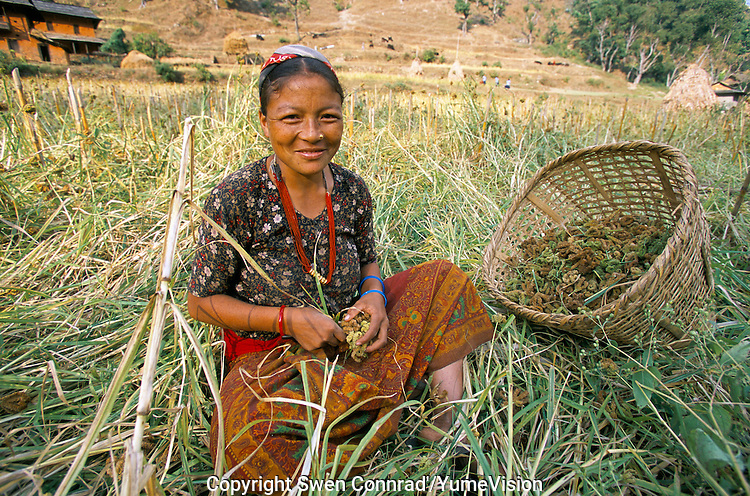 Peasant woman in Rolpa District Nepal