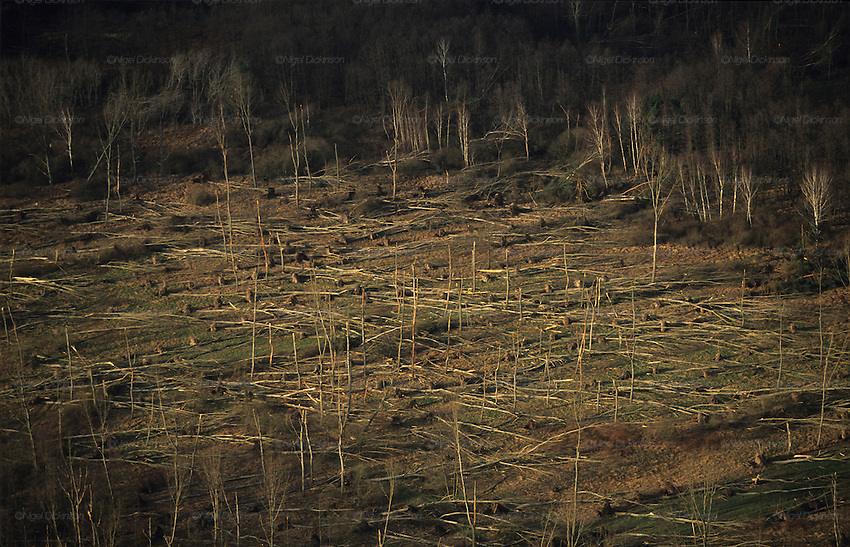 DEFORESTATION STORMS, France. Europe. Haut Marne, Champagne Ardenne. Hurricane force winds uprooted millions of  trees across Europe. Dry weather followed  by heavy rain made the roots vulnerable.  Winds of 100-200kmh swept through the land  causing havoc. Hundreds of millions of trees were knocked down.