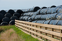 Black plastic wrapped silage, Port Soderick, Isle of Man. August 2012.
