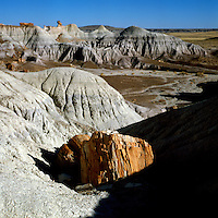 Petrified wood in the PETRIFIED FOREST NATIONAL PARK, ARIZONA