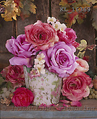 Interlitho, Alberto, FLOWERS, photos, roses, vase, KL16369,#f#