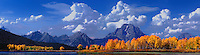 937000011 panoramic view of a cloudy fall morning with yellow colored aspens frame mount moran and the teton range the snake river at oxbow bend grand tetons national park wyoming