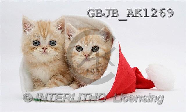 Kim, CHRISTMAS ANIMALS, photos(GBJBAK1269,#XA#) stickers